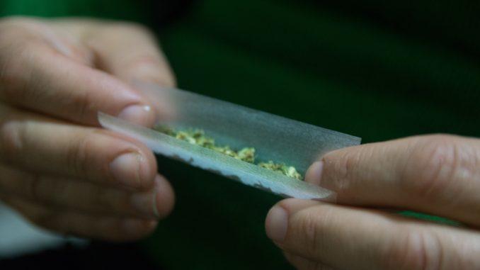 Female hands rolling a marijuana cigars